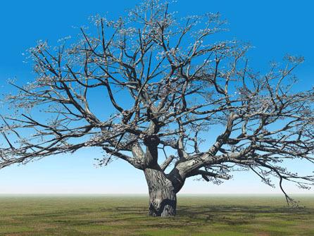 桜の巨木.jpg